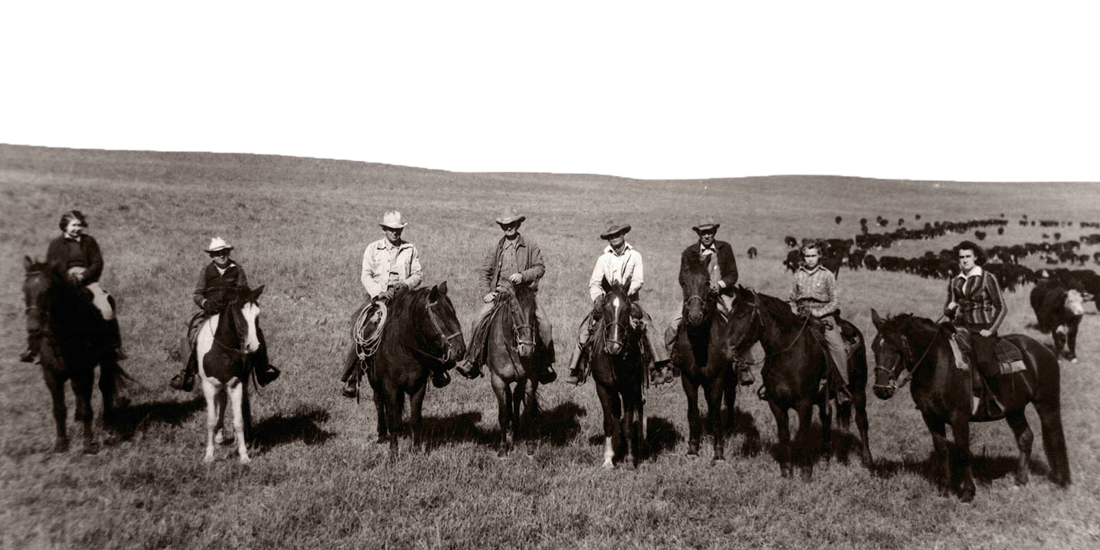 A portrait of the Roglers on horseback, lined up in front of cattle