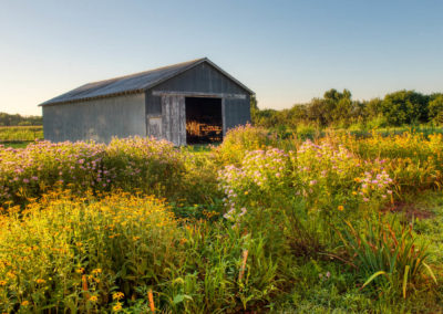 Gray barn and flower garden