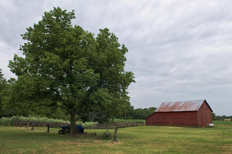 Yard view of a shade tree, tractor, red barn and wooden fence