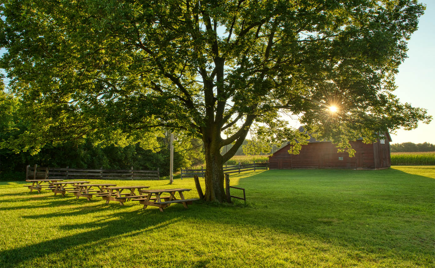 Morning view of a shade tree and picnic tables