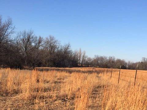 Photo of winter grasslands