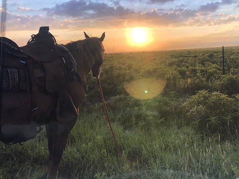 Horse with sunset view over prairie