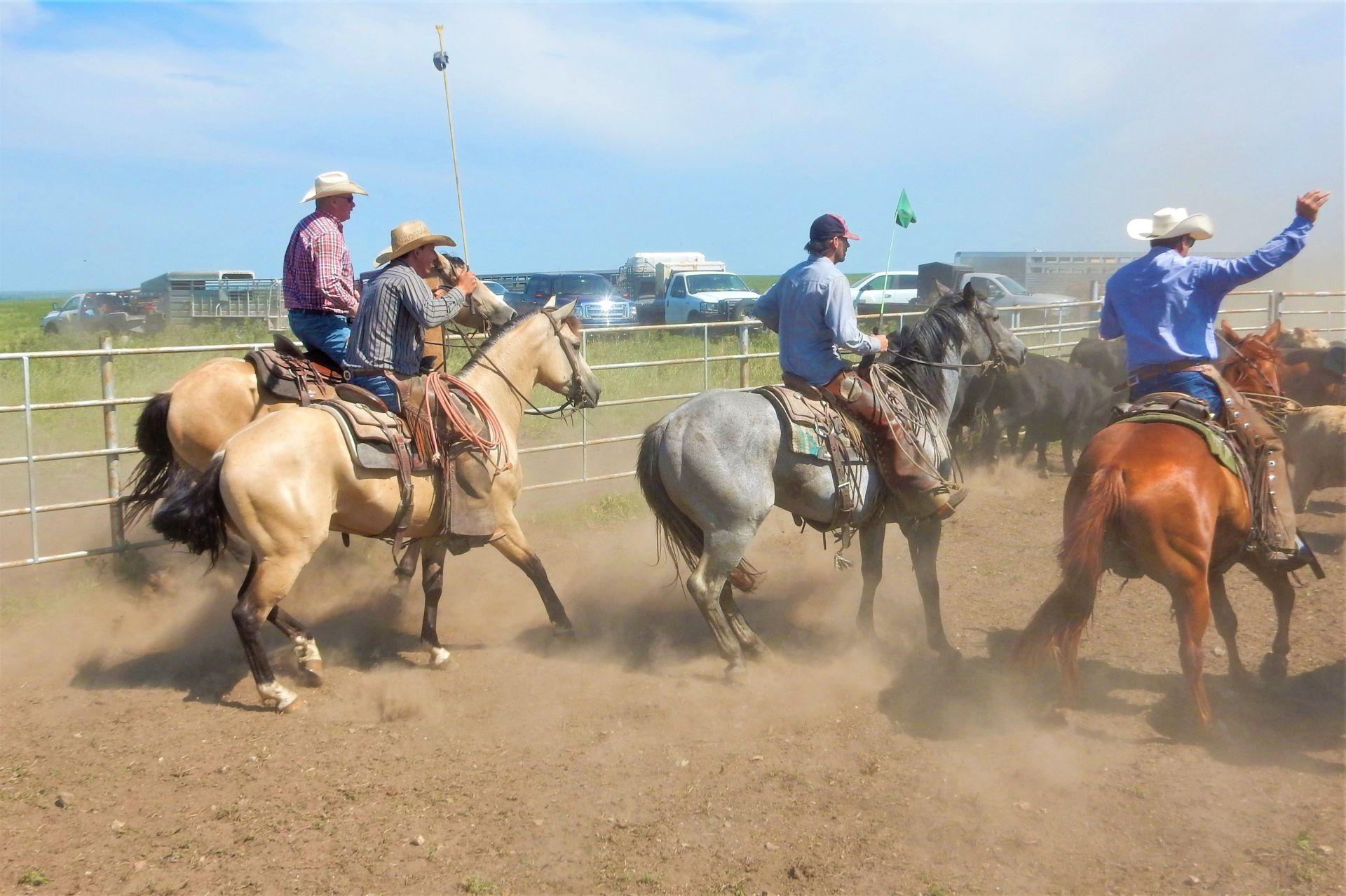 Bruce Gant, Ty Swyler, Zack Parkin, Paul Blair, Moxley Ranch 7-25-19